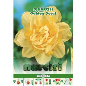 Green Paradise Bulbi Narcise Golden Ducat, galben, 5 buc