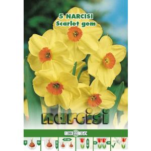 Green Paradise Bulbi Narcise Scarlet Gem, galben-portocaliu, 5 buc