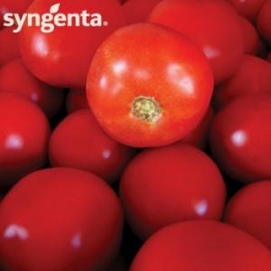 Syngenta Seminte tomate Bobcat F1(1000 sem)